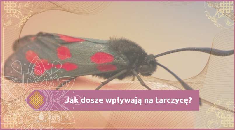 ZtzA-2